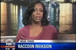 Raccoon Invasion