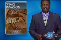 Snake population